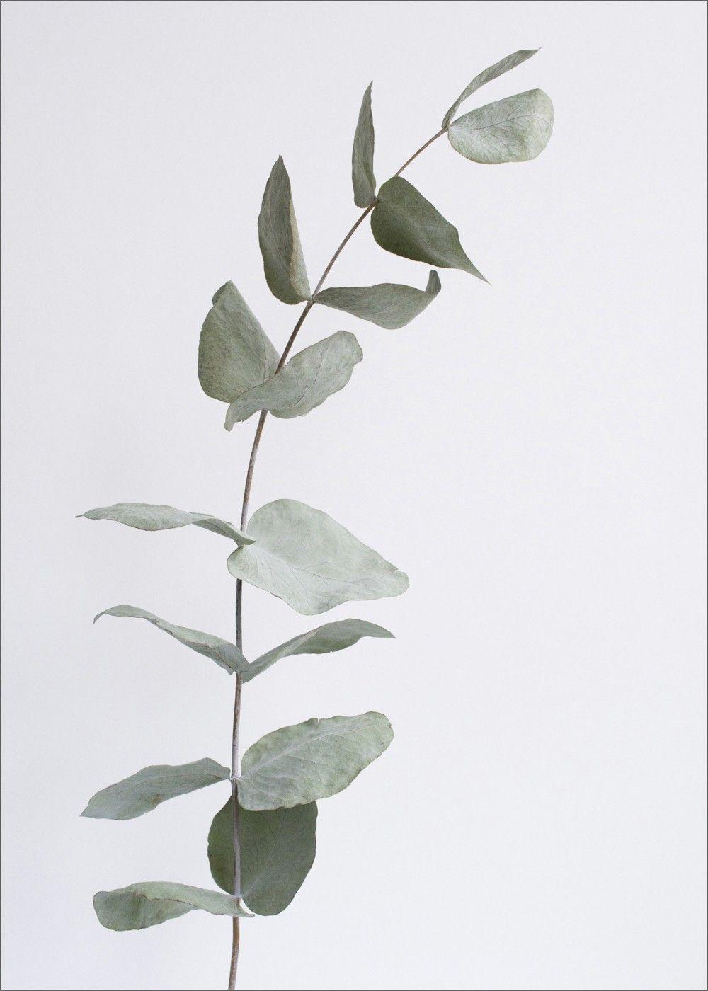 Скандинавские растения открытки, картинки спокойной