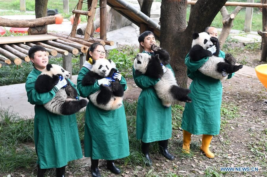 Panda cubs pose for photos for Chinese New Year greeting