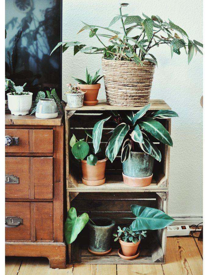 Ton in Ton SoLebIchde Foto frau_seekuh #solebich #zimmerpflanzen - wandfarben wohnzimmer grun