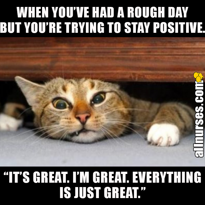 Pin on Cats |Funny Memes Stay Positive