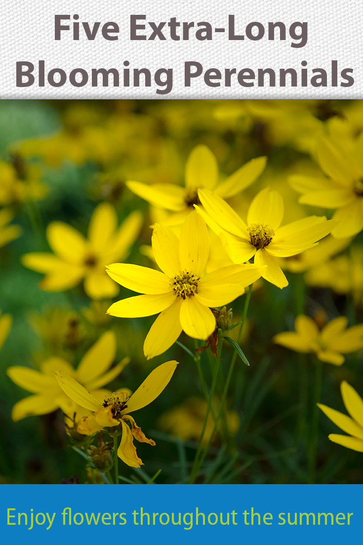 Want an easy care plant that flowers a long time? 5 ...