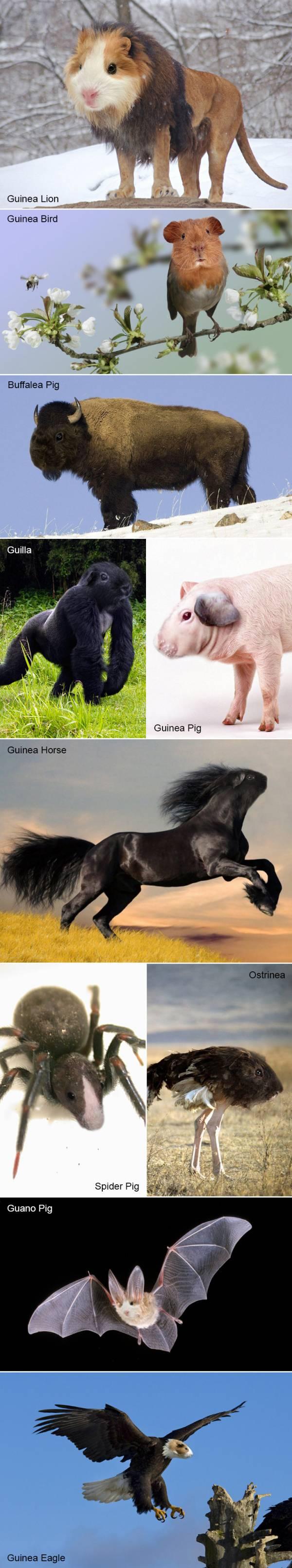 Photo of Piggums!