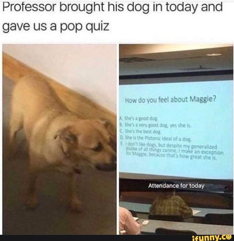 Professor Brought His Dog In Today And Gave Us A Pop Quiz Ifunny Dog Quotes Funny Dog Memes Funny Dogs