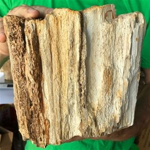 Best Petrified Wood Fossilized Tree Log 13 1 Lbs Texas 8 In 400 x 300