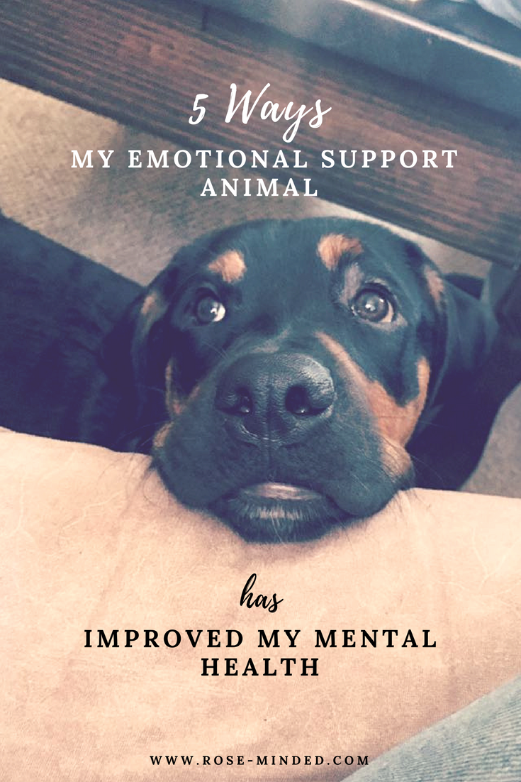 Image of: Vest Ways My Emotional Support Animal Has Improved My Mental Health Selfcare American Kennel Club Ways My Emotional Support Animal Has Improved My Mental Health