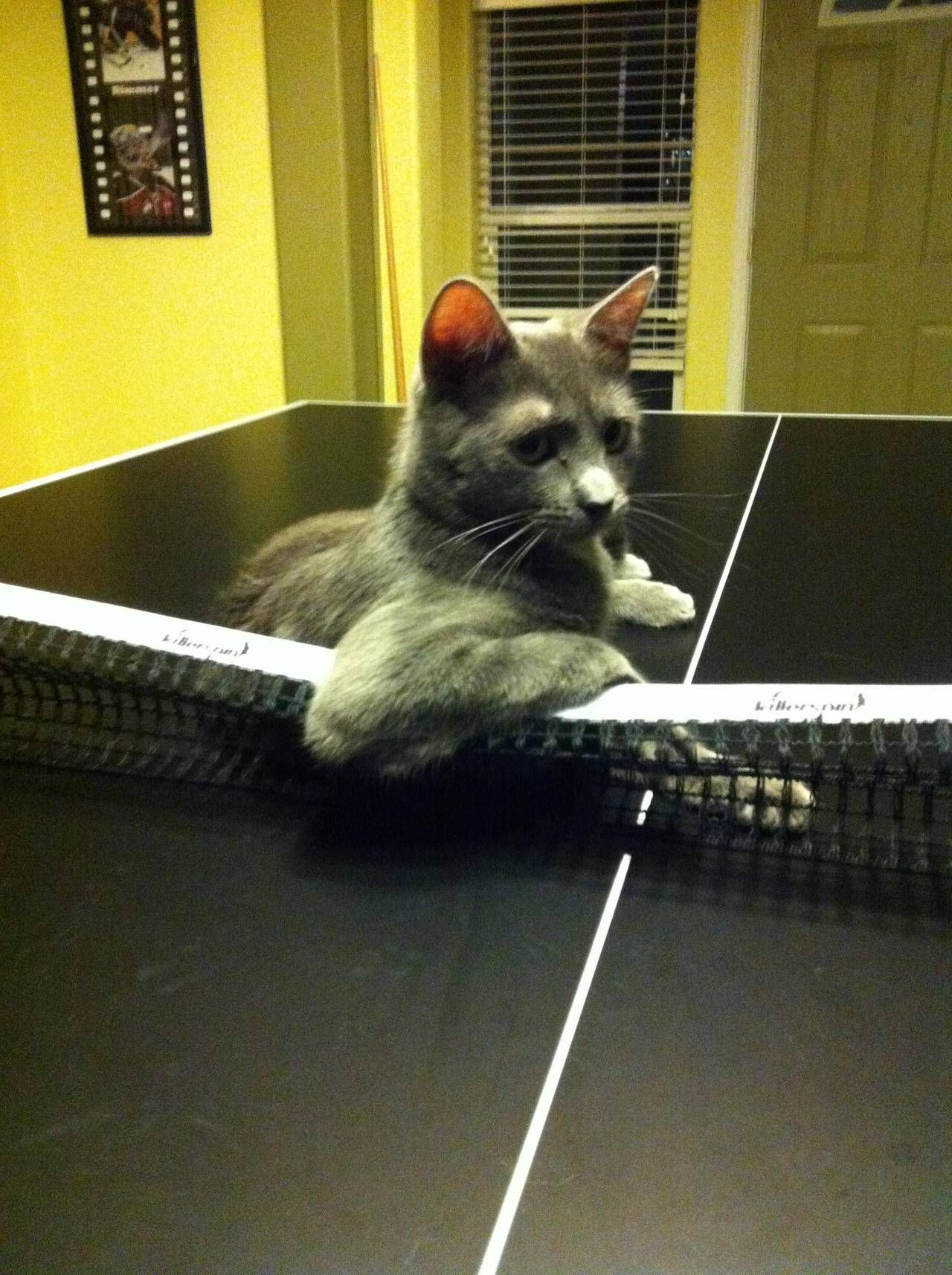 """""""So, do you come here often?"""" Photo via Imgur Cats, Cats"""