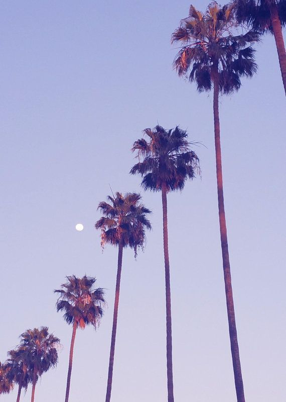 Palm Trees Los Angeles California Photo Print. L.A. Photography, Dusk, Purple, Moon, Hipster, Minimalist, Home Decor Wall Art, Modern Home