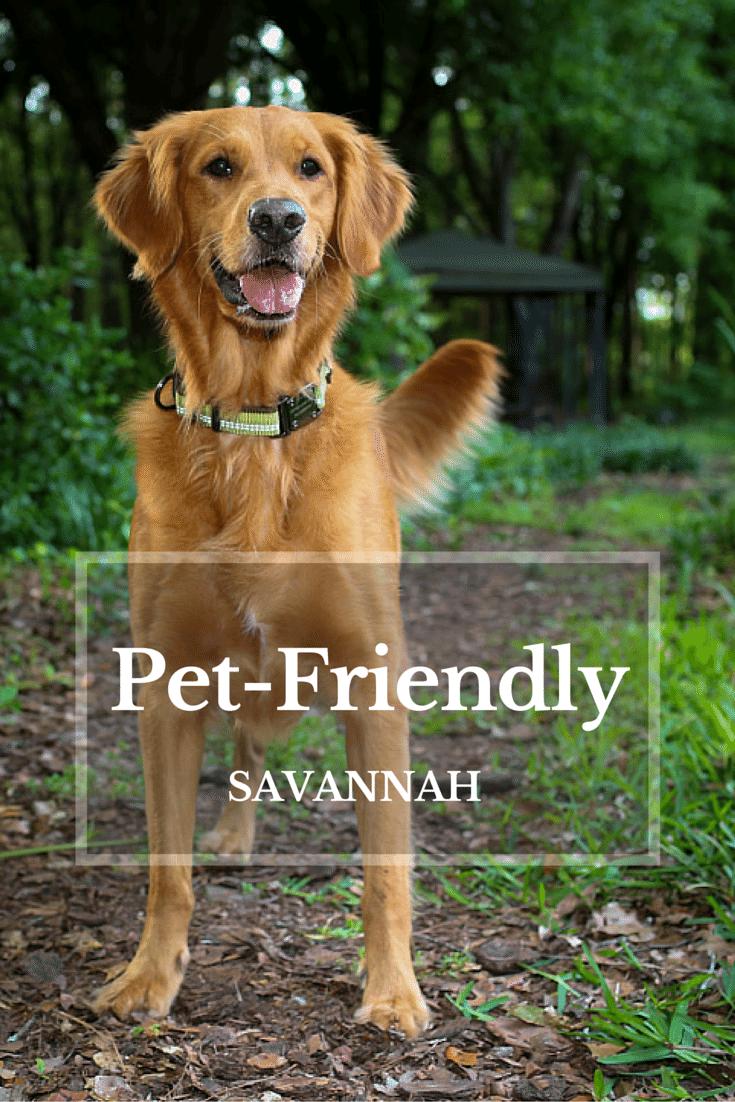 East Bay Inn And Olde Harbour Inn Are Two Pet Friendly Inns In Savannah Ga Savannah Chat Pet Friendly Vacations Savannah Hotels