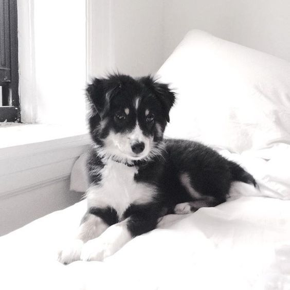 Pinterest Sarahesilvester Cute Animals Puppies Cute Puppies