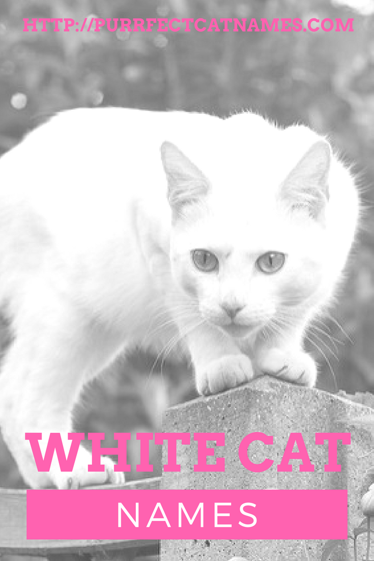 White Cat Names Cat names, White cat, Cats
