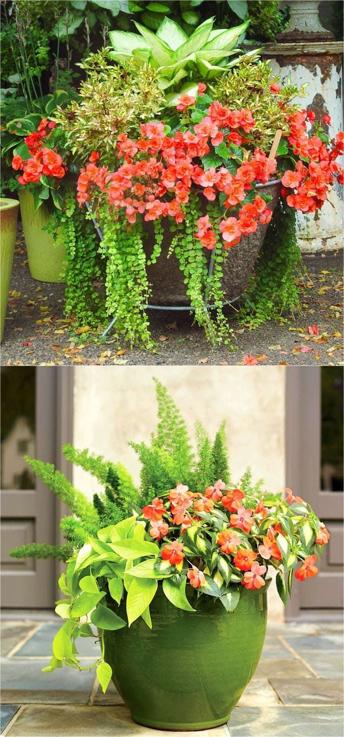 Best Shade Plants 30 Gorgeous Container Garden Planting 400 x 300