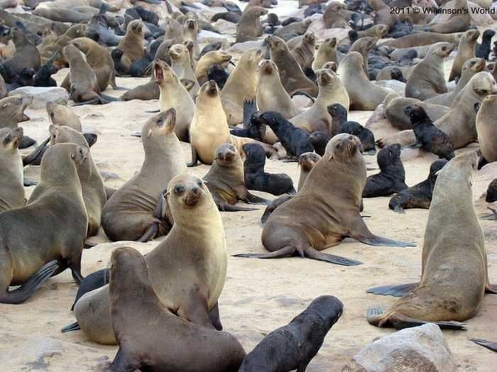 Image result for group of seals