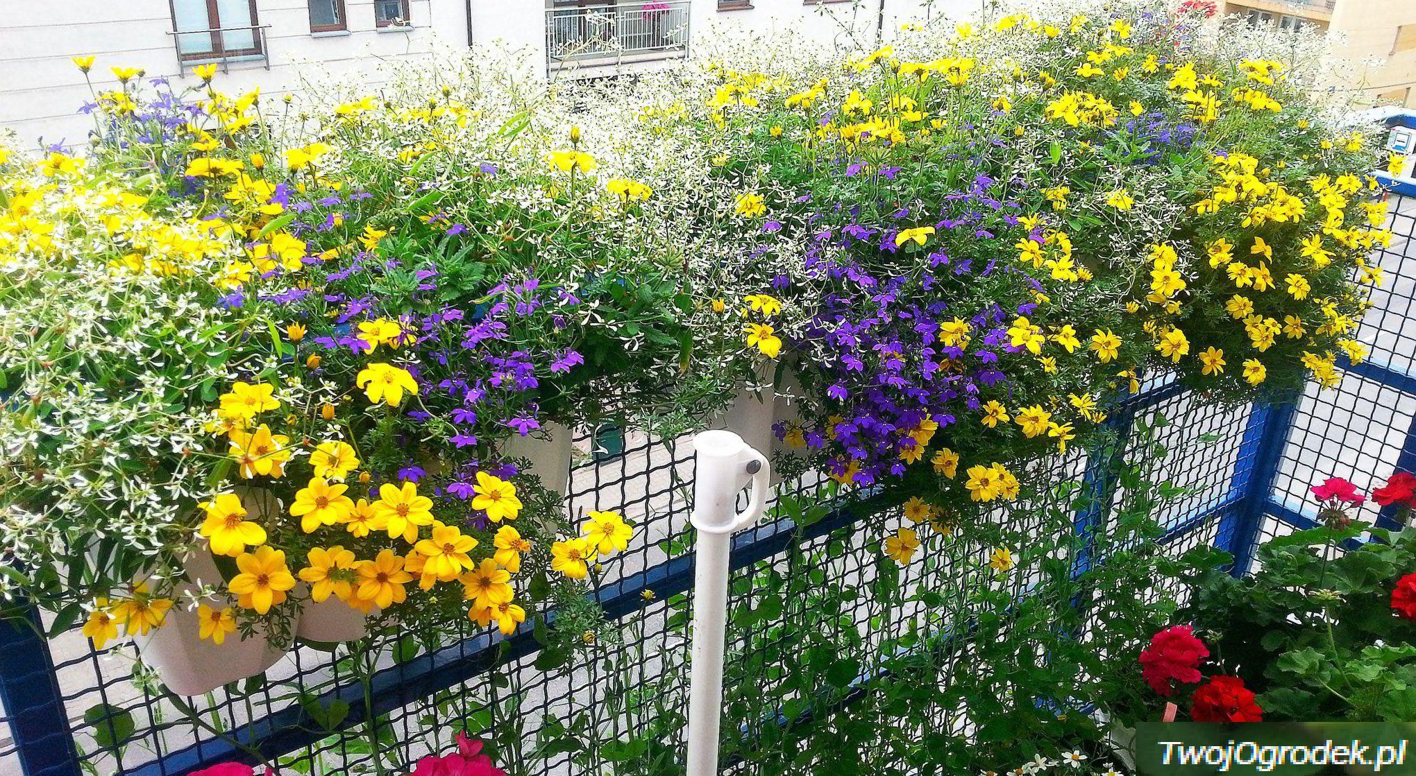 Moc Kolorow Balkony Czytelnikow Plants
