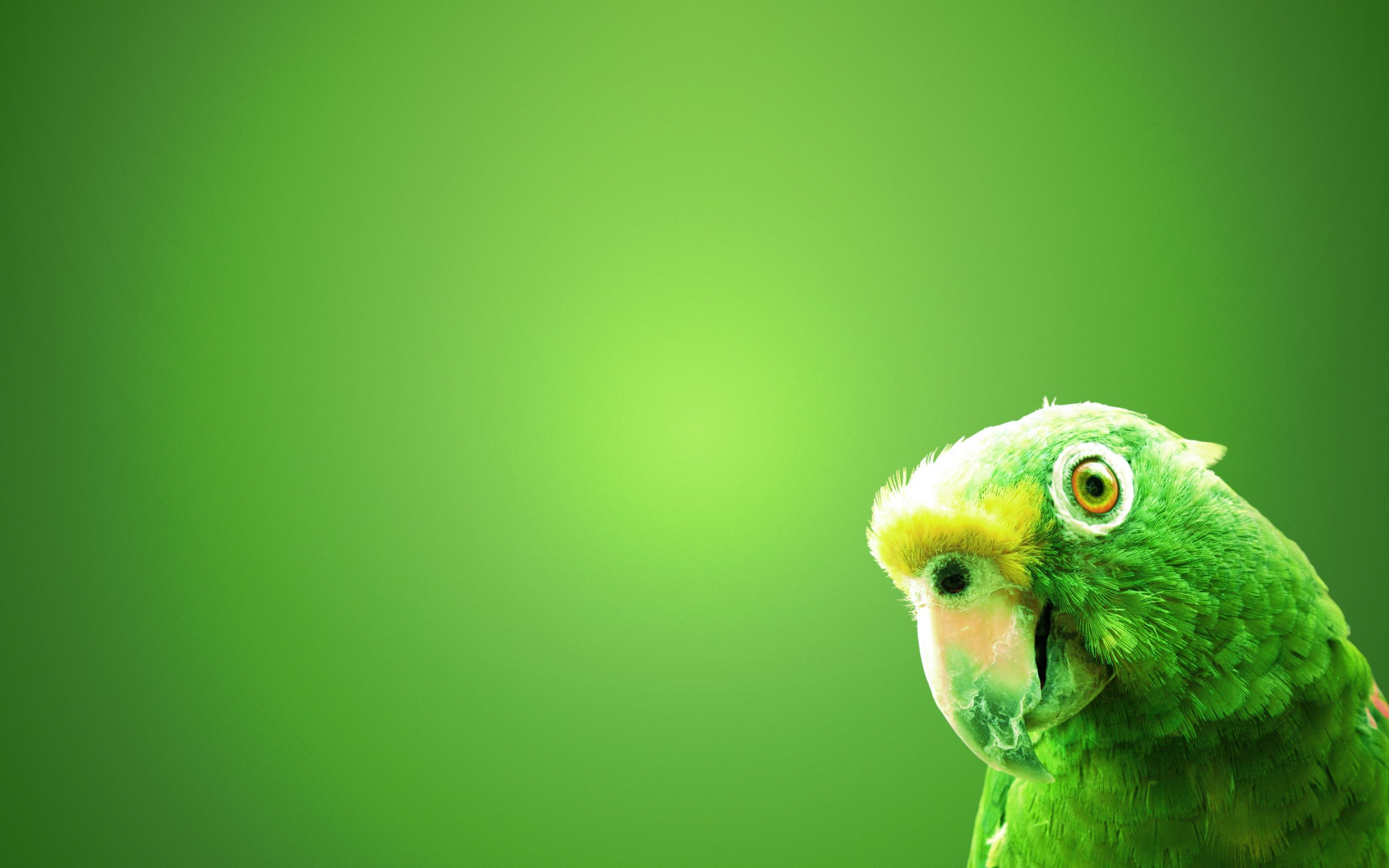 Hd wallpaper wide - Green Parrot Wide Wallpaper Hd Wallpaper