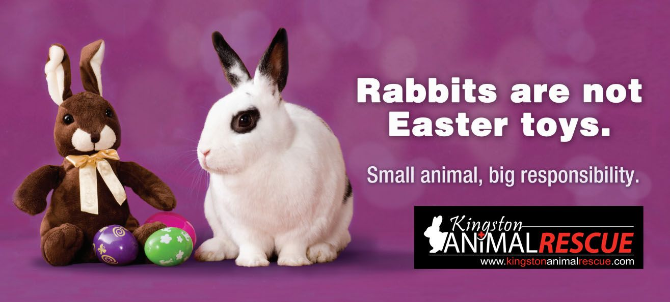 Easter Reminder Bunnies Are Great Companions But They Re A 10 Year Commitment If You Re Ready For That Find Animals For Kids Best Pets For Kids Pet Rabbit
