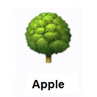 Meaning Of Tree Emoji In 2021 Tree Emoji Emoji Every Emoji