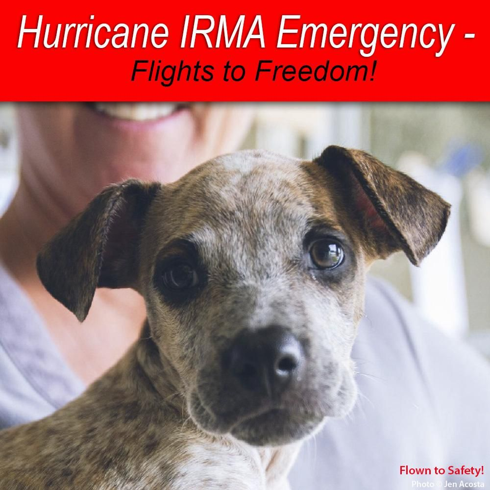 Help Fly Pets to Freedom   Save animals and Animal