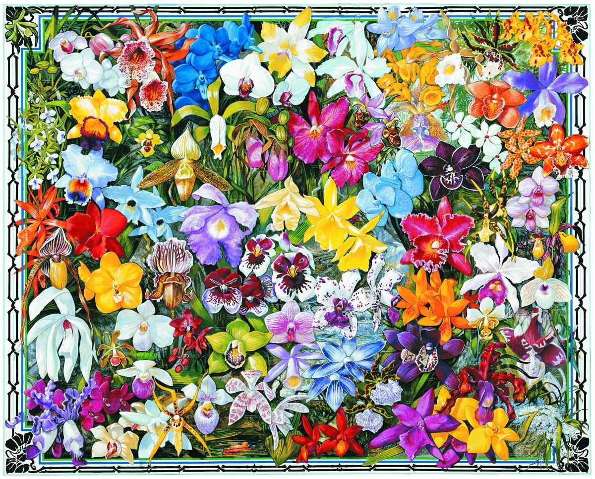 White mountain puzzles orchids do it yourself jigsaw puzzle boxed white mountain puzzles orchids do it yourself jigsaw puzzle boxed attractively with the solutioingenieria Image collections