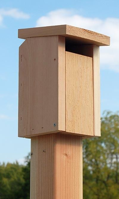Songbird Essentials Sparrow Resistant Bluebird House🚛