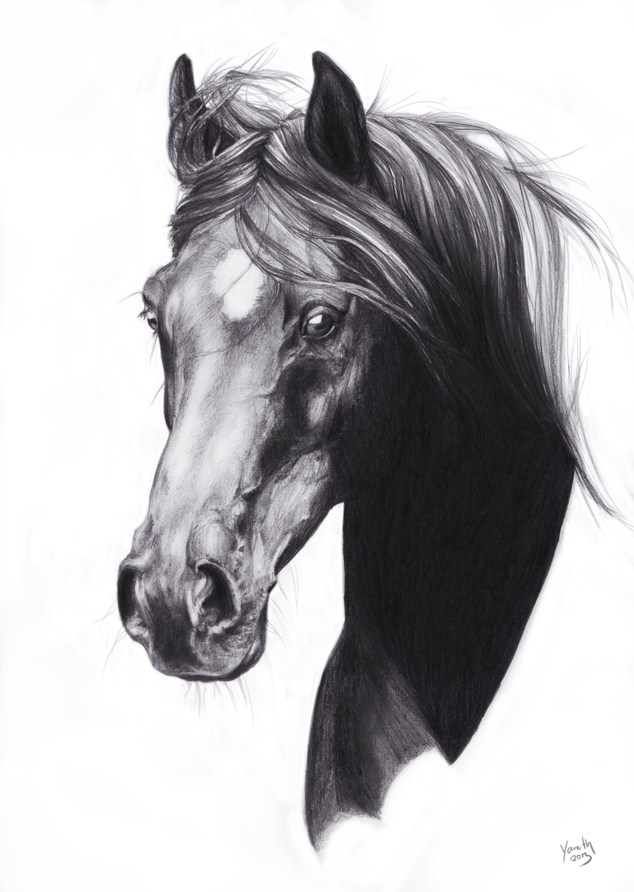 Horse Pencil Sketch | Room | Pinterest | Horse Sketches ...