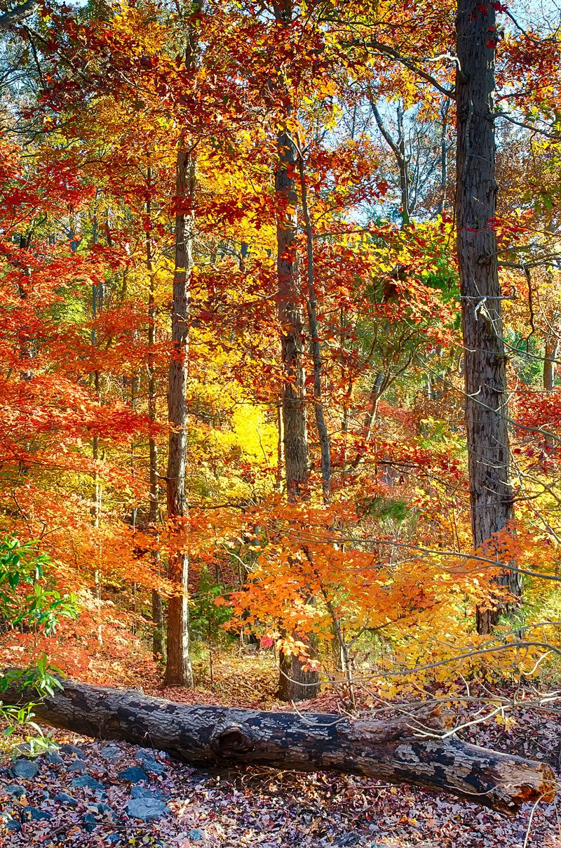 Beautiful Colorful Leaves #Photography 30 Days FREE $4.95 per month after 30 days