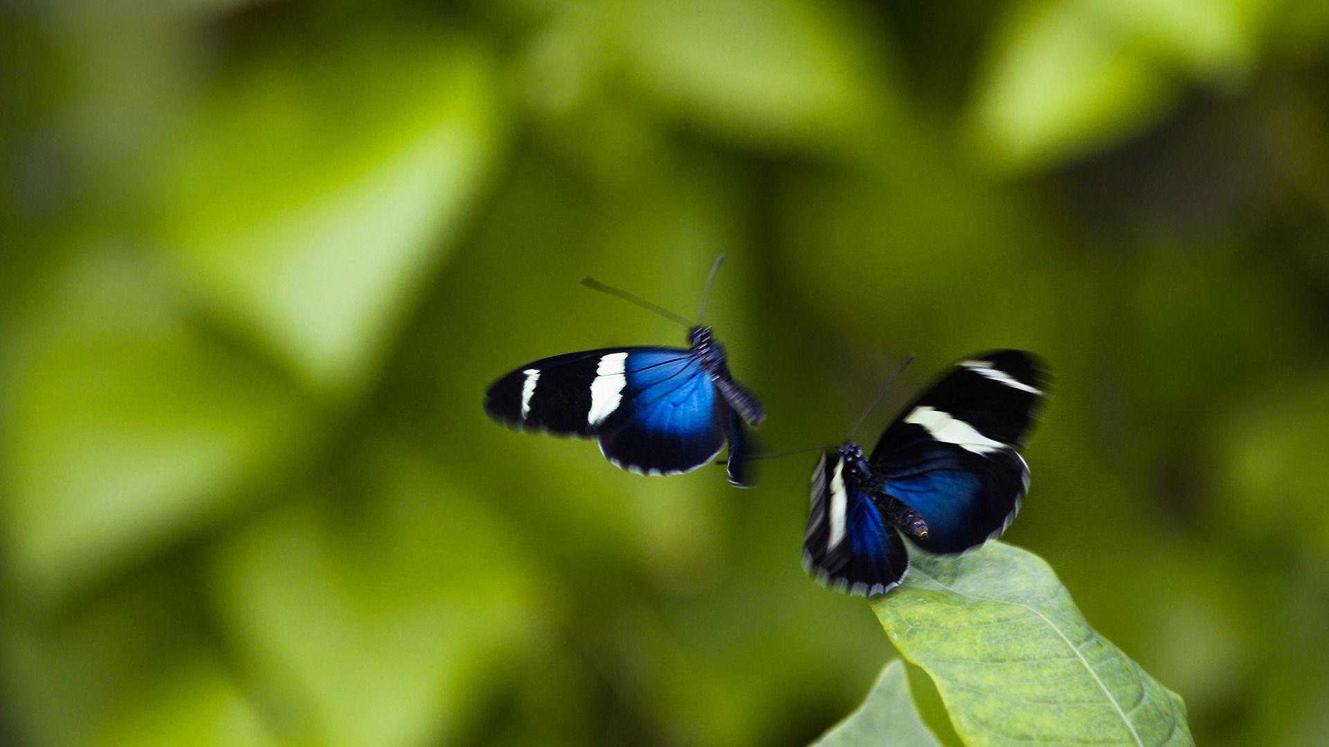 real butterflies flying wwwpixsharkcom images