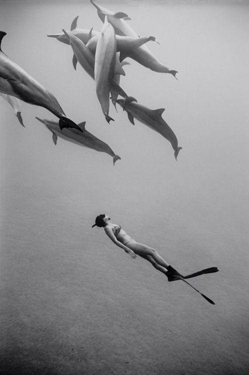 fotografia preto e branco de snorkel com golfinhos