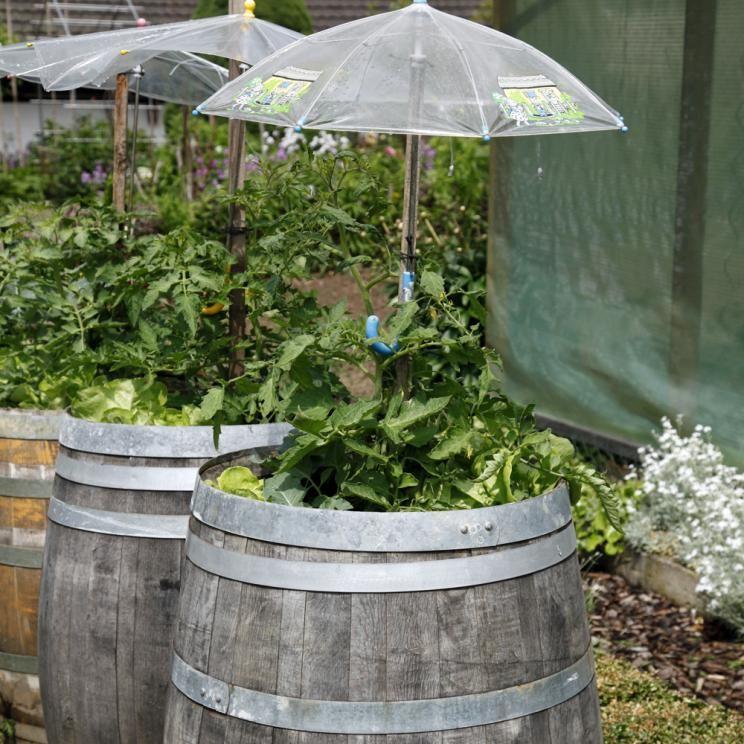 Pin Von Kathrin Wagner Auf Pflanzen: Tomatenhaus Selber Bauen