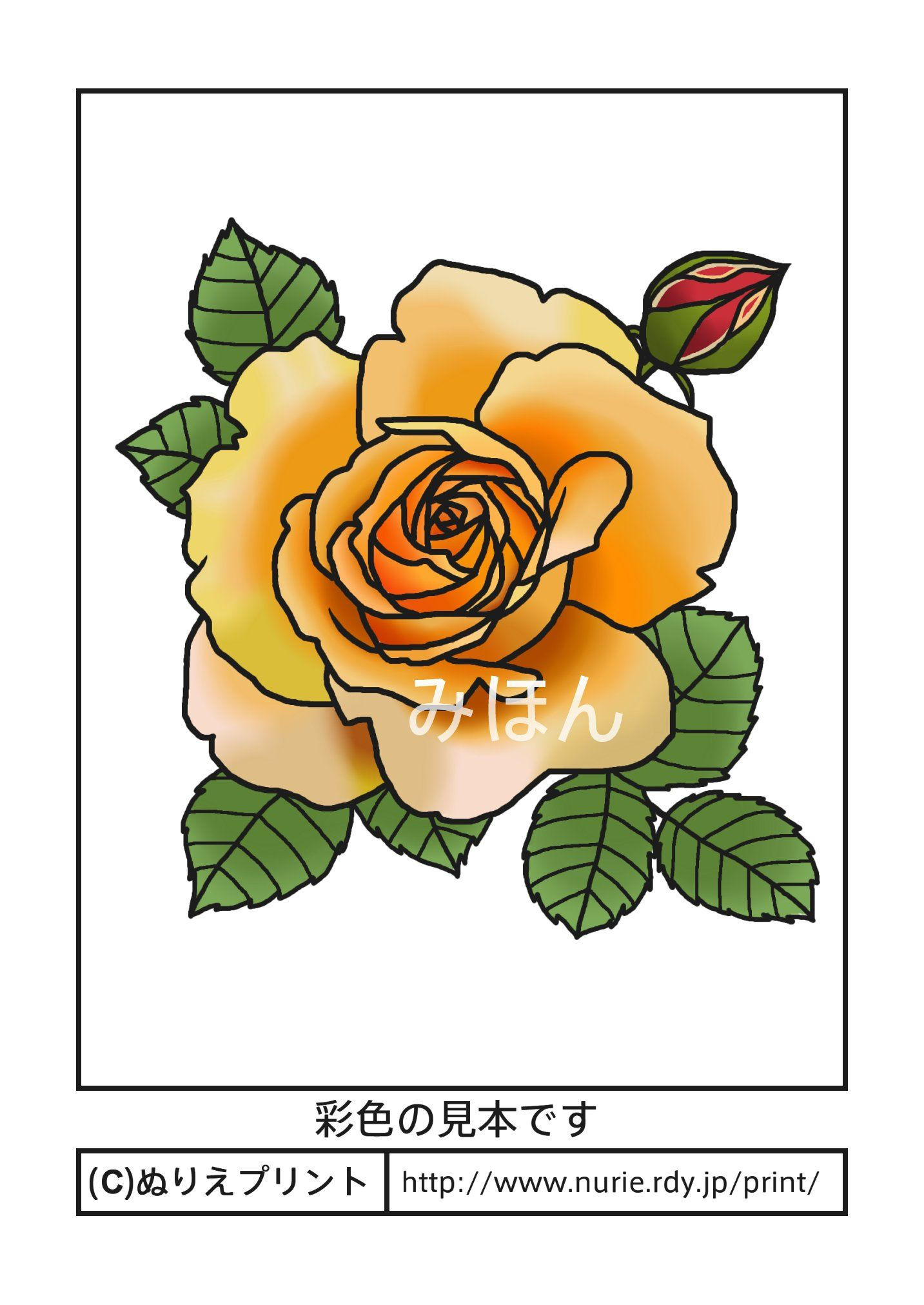 バラ5彩色見本花の塗り絵無料イラストぬりえプリント A Design