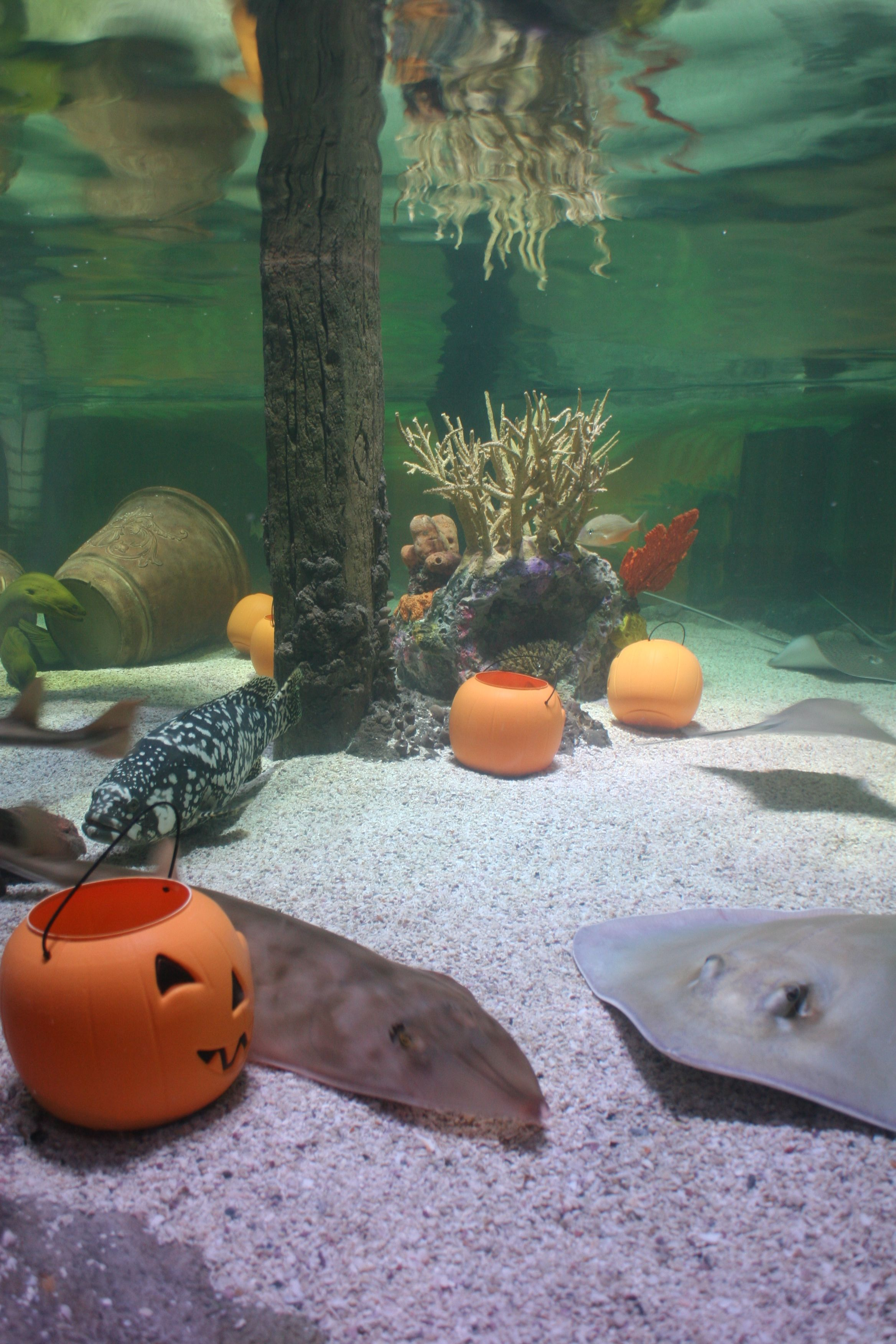 Ray Lagoon was transformed into a pumpkin patch just in time for
