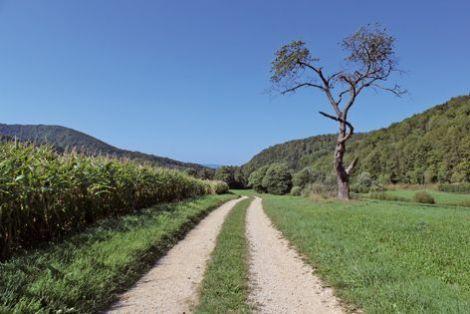 L'office de tourisme du Sundgau propose une boucle de 9 km, accessible pour toute la famille, depuis Oberlarg en passant par le château de Morimont (fiche à télécharger sur le site). Les tumultes de la ville paraissent bien loin, entre pâturages et champs de maïs.