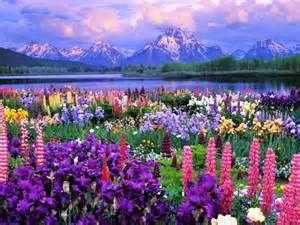 free spring screensavers bing images springtime pinterest