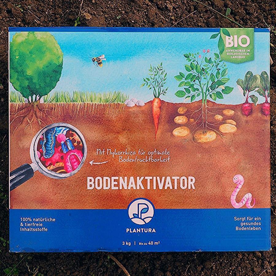 Stecklinge vermehren: Stecklinge von Hortensie, Rose und Co bewurzeln - Plantura