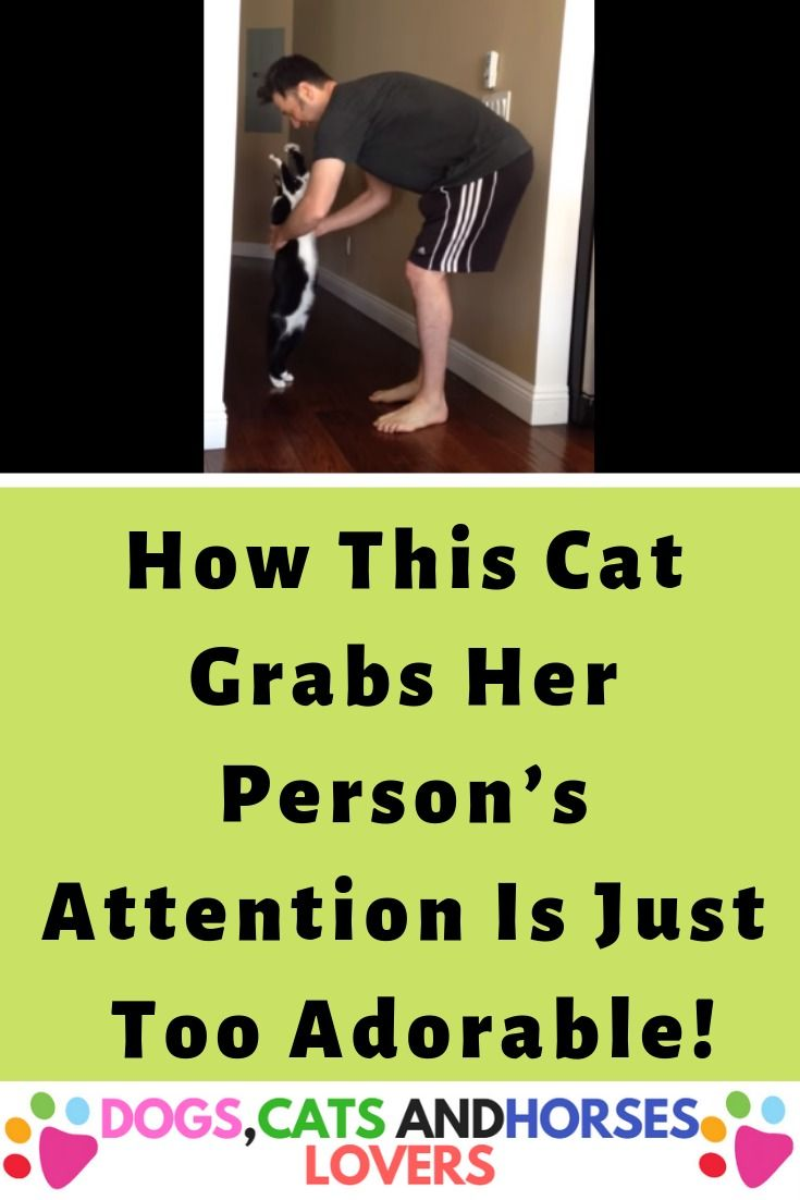 cats kittens cat catlover catcare cute pets