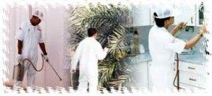 شركة مكافحة حشرات بالرياض خبراء فى مكافحة جميع أنواع الحشرات والقوارض وباحدث الاجهزة وبمواد اوروبية بدون رائحة وبدون مغادرة المكان مكافحة النم Blog Posts Bird