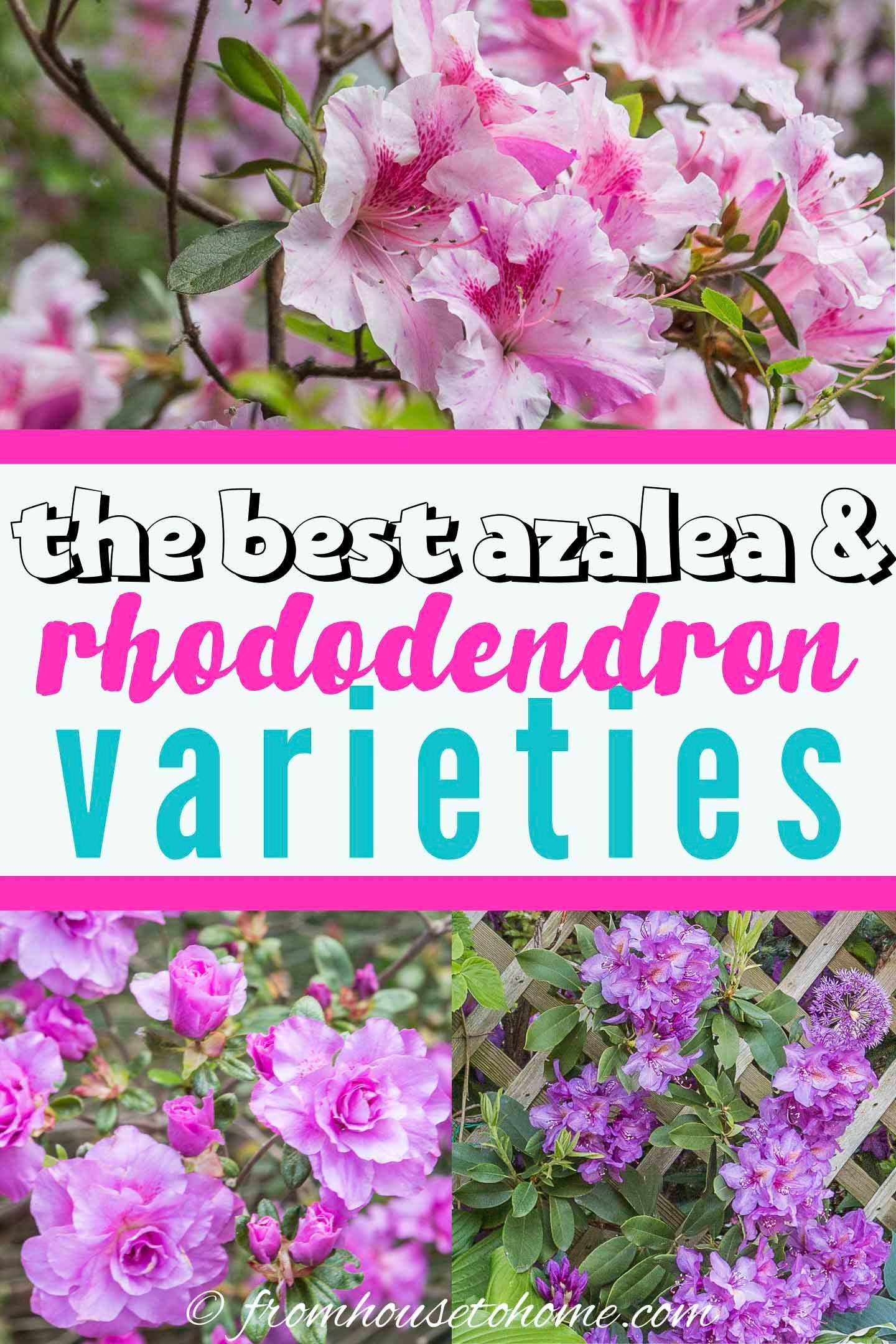 d1b92fc05637f75bfdc9bcf8fc0c261d - Best Gardens For Azaleas And Rhododendrons