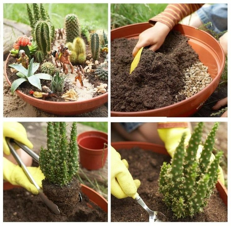 Planting A Succulent Container Garden | How To Plant A Cactus Container  Garden | Garden