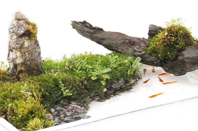 新しいメダカ飼育の楽しみ方 Bon Style 盆スタイル こけ庭 植物栽培 ミニチュアガーデン