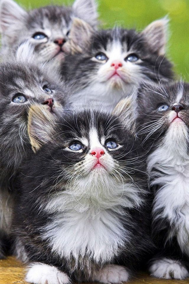 A bunch of kitties..... Oh goodness, the cuteness is