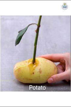 Best Fertilizer For Tomato Plants In 2020 Plant Hacks 400 x 300