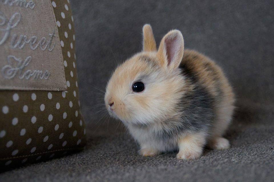 Fat Rabbits!