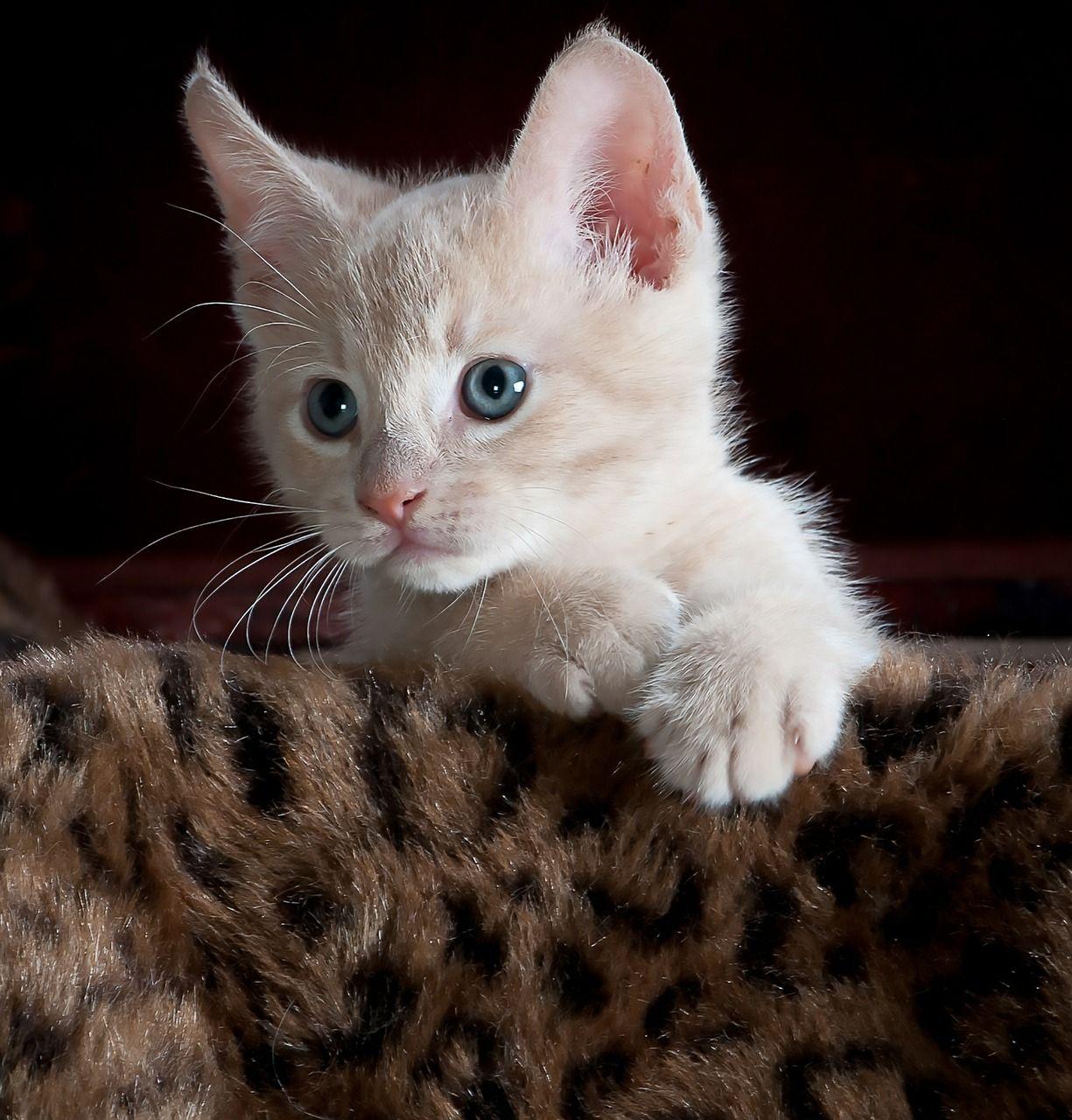 Pin On Gatos Bonitos