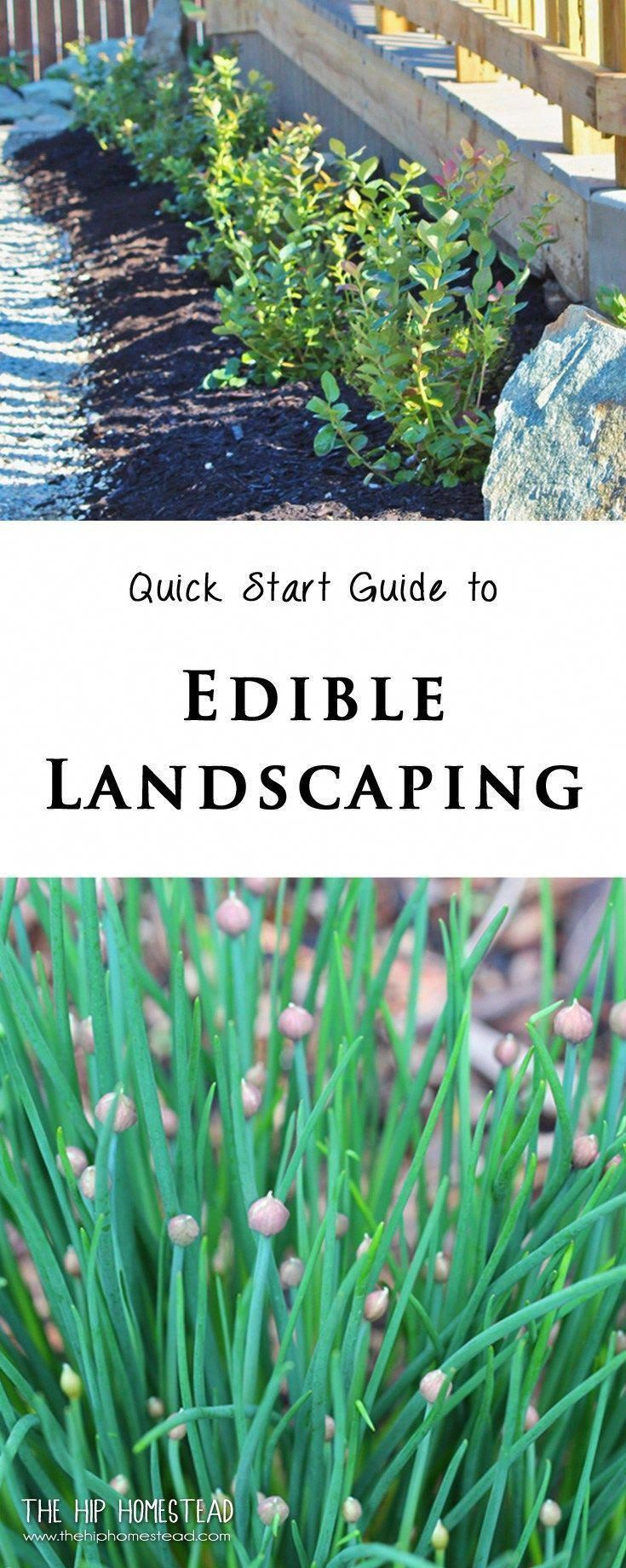 Quick Guide to Edible Landscaping The Hip Homestead