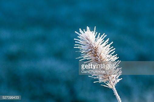 Stock Photo : First Frost