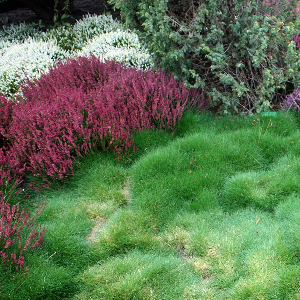 Barenfellgras Bepflanzung Pflanzen Garten
