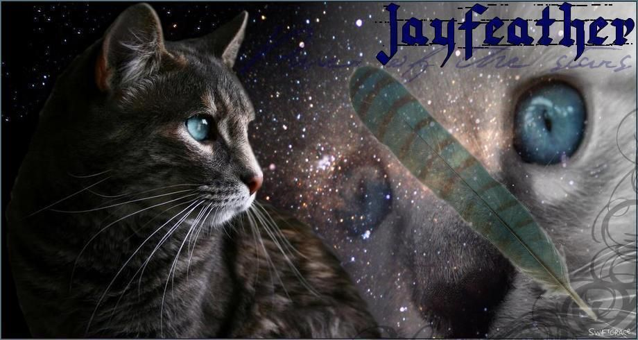Jayfeather Warrior Cats Warrior Cats Art Warrior Cats Quotes