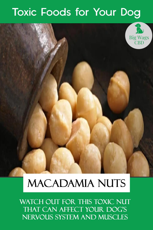 Macadamia Nuts Food Toxic Foods Eat