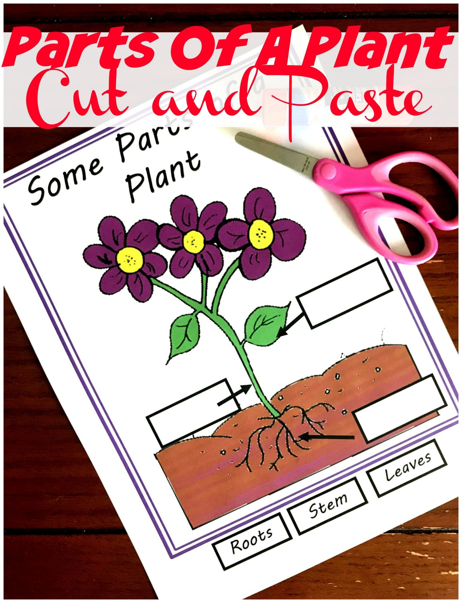 Five Free Irresistible Parts Of A Plant Worksheets With