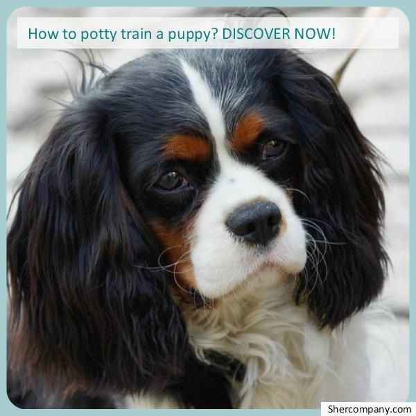 Dog Training Boot Camp Check Out The Pic For Various Dog