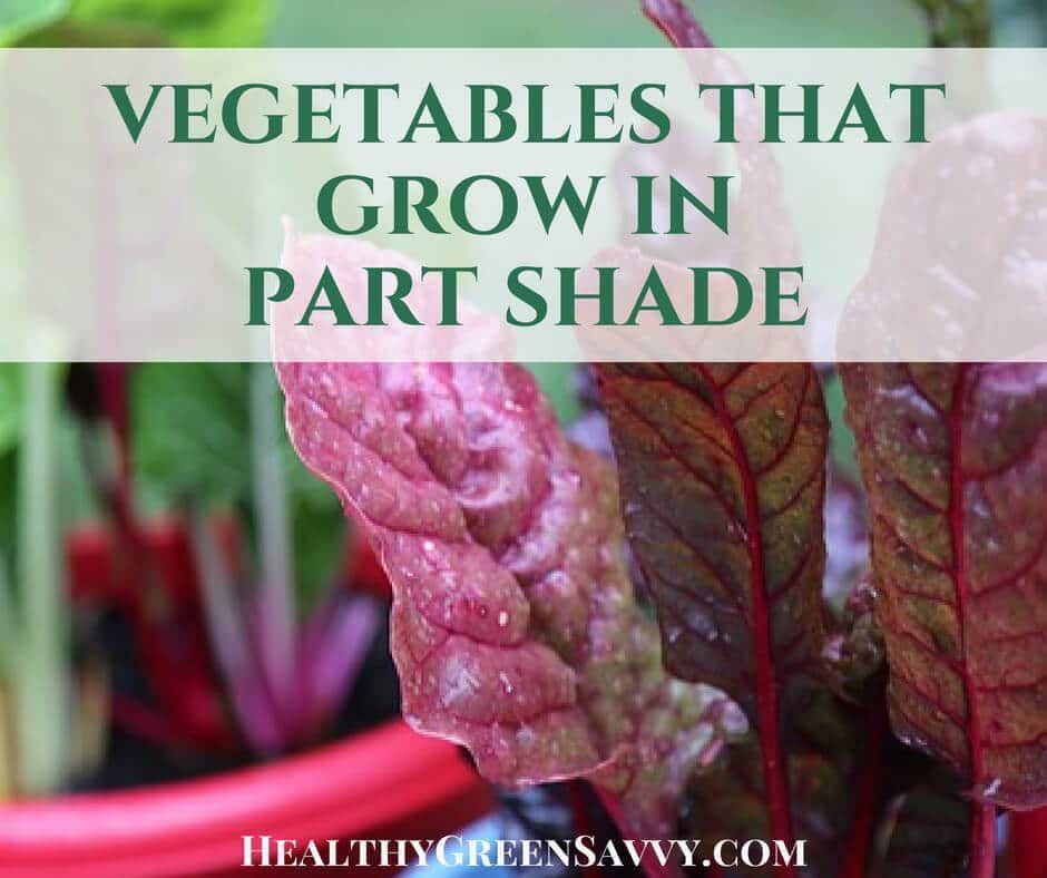 40 Vegetables That Grow In Shade Growing Rhubarb 400 x 300